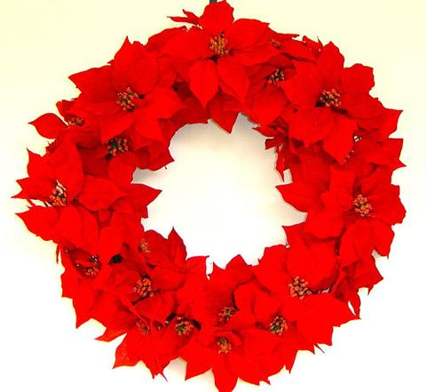 poinsettia wreath holiday