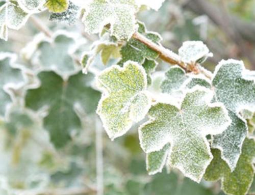 Identification & Treatment of Mildew on Interior Plants