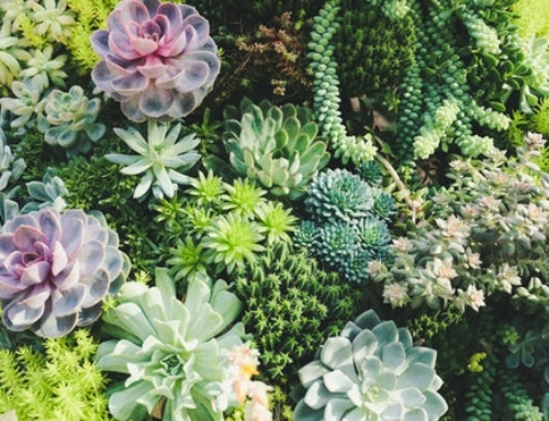 How to Learn Botanical Nomenclature