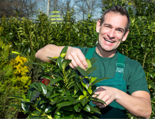 Extend the Life of your Interior Plants with Pruning