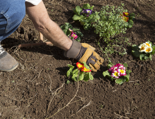 Healthy Plants Need Good Soil