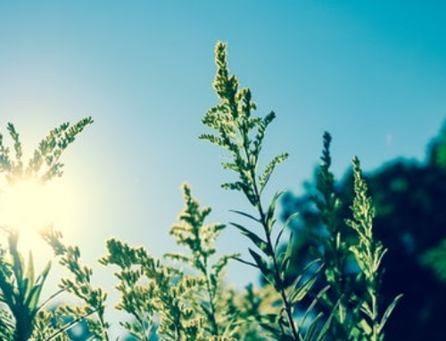 Why Plants Need Sunlight