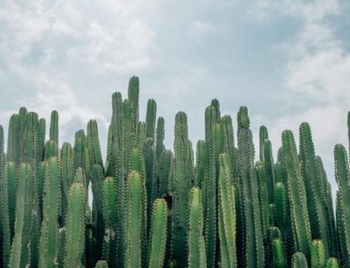 Cactus Classification