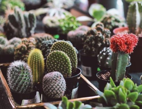 Spotlighting: Cactus