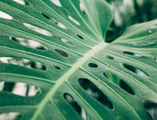 The Importance of Plant Inventories