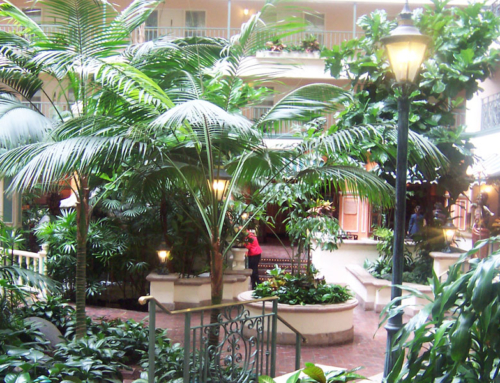 Plant Spotlight – Kentia Palms