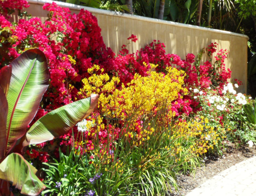 Caring for Plants in Top-Impact Areas