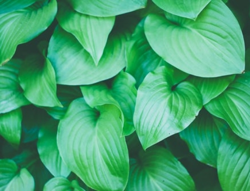 10 Reasons Why Plants Fade