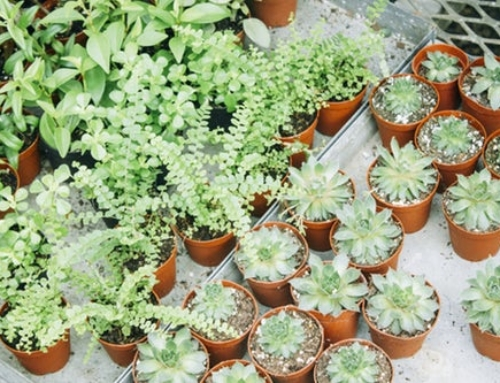 Caring for Sick Plants