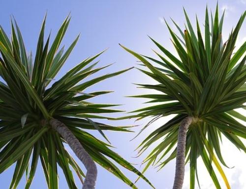 Plant Grooming Basics