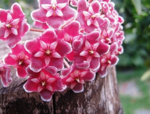 3 Blooming Plants