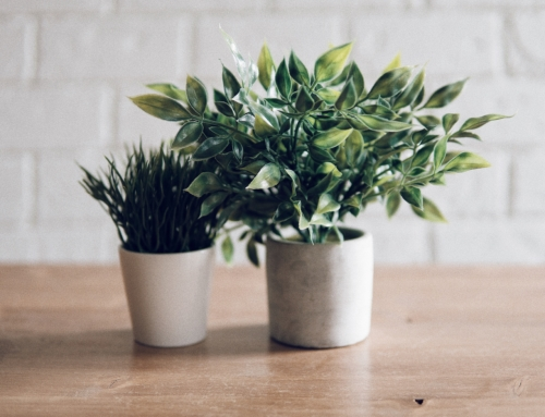 Dressing (Your Plants) for Success